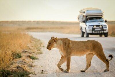 Naklejka African safari