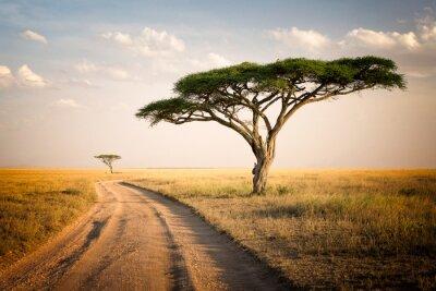 Naklejka Afrykański krajobraz - Tanzania