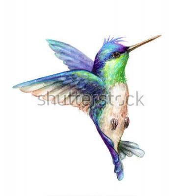 Naklejka akwarela ilustracja, latający koliber na białym tle, kliparty egzotyczne, tropikalne, dzikie życie