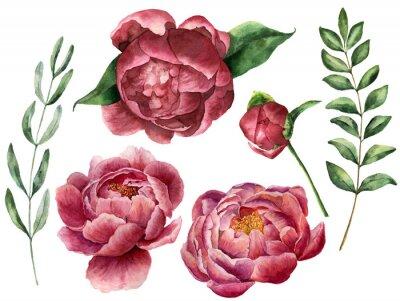 Naklejka Akwarela kwiatowy zestaw z piwonia i zieleni. Ręcznie malowane kwiaty z liśćmi, oddział eukaliptus i rozmaryn samodzielnie na białym tle. Ilustracji wektorowych dla projektu.