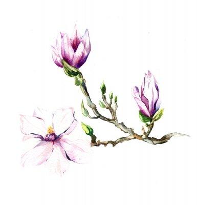 Naklejka akwarela kwiaty magnolii odizolowane na białym tle