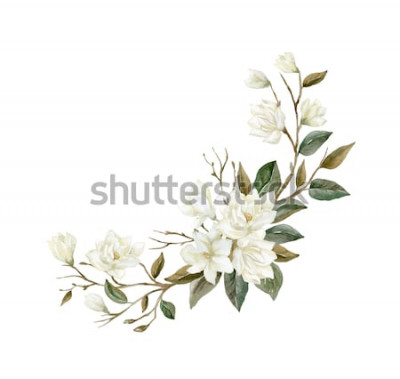Naklejka Akwarela Magnolia oddział. Ilustracja kwiat magnolii.