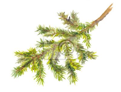 Akwarela malowane gałęzi sosny