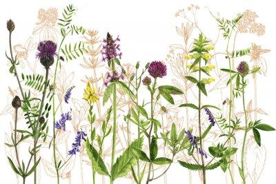 Naklejka akwarela rysunek kwiatów i roślin