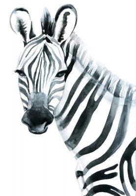 Naklejka Akwarela zebra na białym tle ilustracji rastrowych