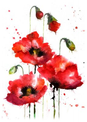 Naklejka Akwarele ręcznie rysowane kwiaty maku