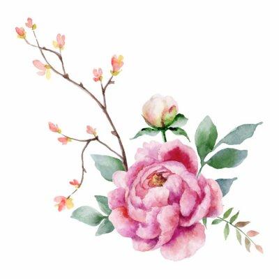 Naklejka Akwareli wektorowa ręka maluje ilustrację peonia kwiaty i zieleń liście.