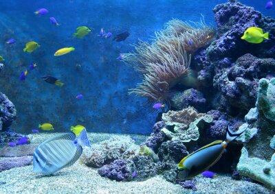 Naklejka akwarium