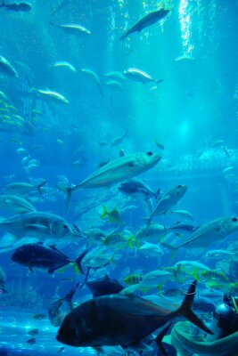 Naklejka akwarium z rybami i Rafa
