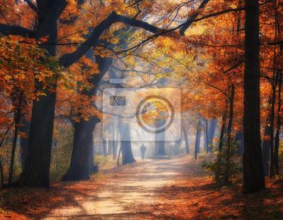 Naklejka Aleja w parku jesienią