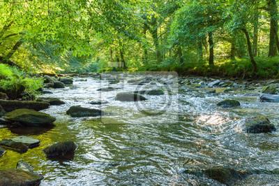 Naklejka Along the river Barle in Tarr Steps Woodland