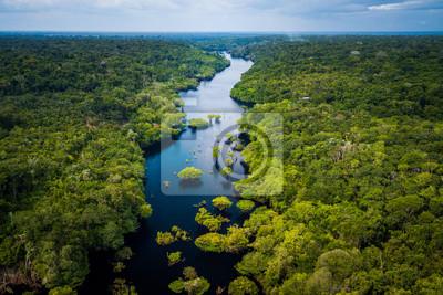 Naklejka Amazon Rainforest in Anavilhanas National Park, Amazonas - Brazil