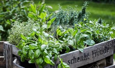 Naklejka Assorted fresh herbs growing in pots