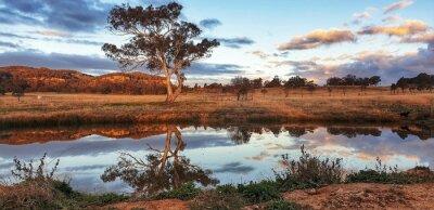 Naklejka Australian country bush scene with large gum tree reflected in water