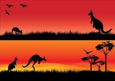 Naklejka Australian Kangaroos in the sunset