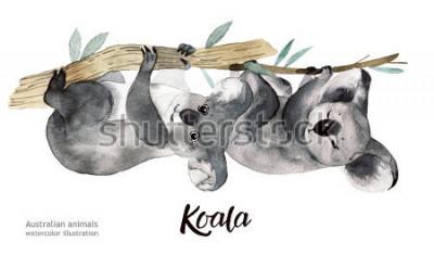 Naklejka Australijscy zwierzęta akwareli ilustracyjna ręka rysująca przyroda o tematyce na białym tle.