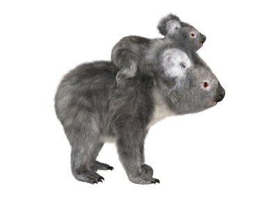 Naklejka Australijski Koala Bears