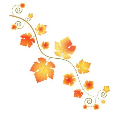 Autumn branch with grape leaves. Bright yellow-red colors of the leaves. Beautiful curvy lines.