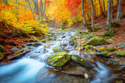 Naklejka Autumn landscape -  river waterfall in colorful autumn forest park with yellow red  leaves