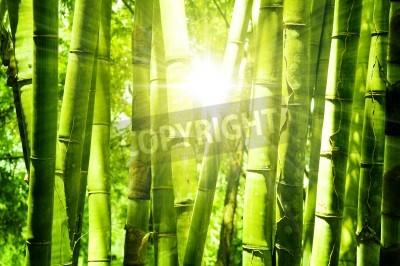 Naklejka Azjatyckie Bambus lesie z rano światło słoneczne.