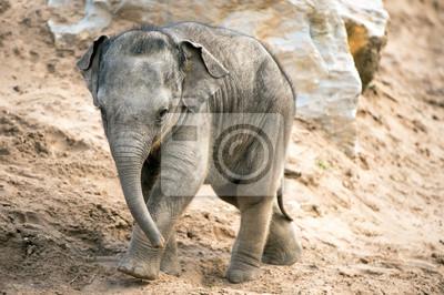 Naklejka Baby Elephant