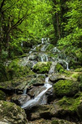 Naklejka Bach w lesie
