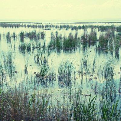 Naklejka Bagnisty teren z trawy i turzycy