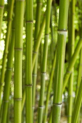 Naklejka Bamboo 01