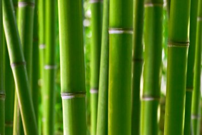 Naklejka Bamboo forest