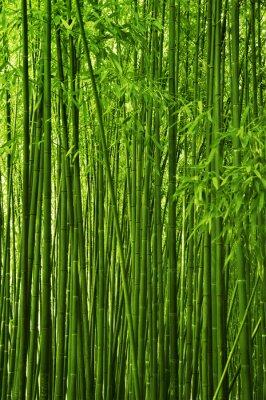 Naklejka Bamboo forest texture