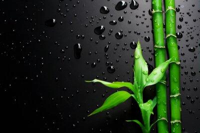 Naklejka Bamboo na Czarny