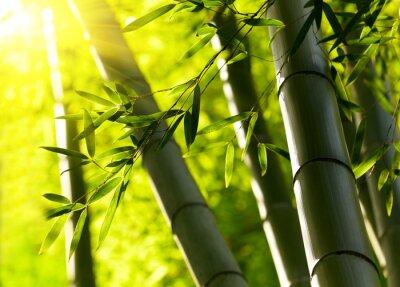 Naklejka Bamboo tle lasu. Shallow DOF