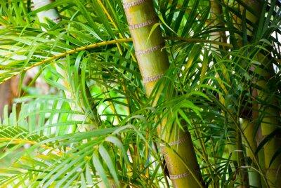Naklejka Bamboo Zamknij