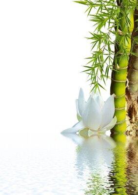 Naklejka bambou asiatique et blanc lotosu