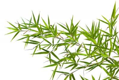 Naklejka bambou sur fond blanc