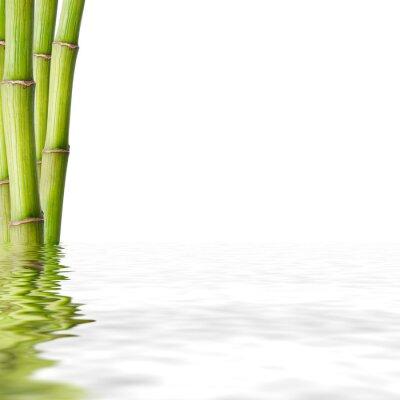 Naklejka bambú reflejado en el agua