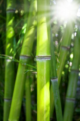 Naklejka Bambus mit Sonnenschein