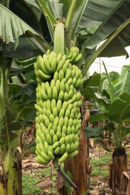 Naklejka Banan