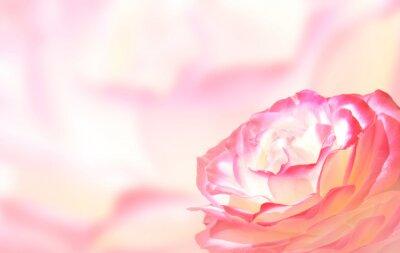 Naklejka Banner z różowej róży