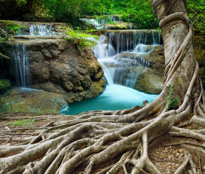 Naklejka Banyan Tree i czystości wapienne wodospady w głębokim lesie użytkowania n