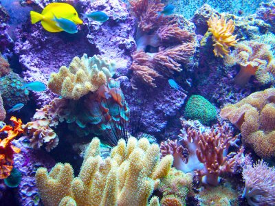 Naklejka Barriera Corallina 2