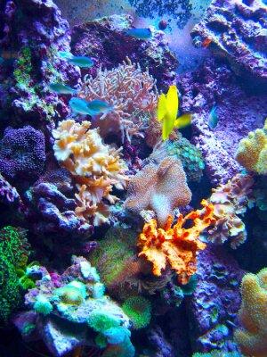 Naklejka Barriera Corallina