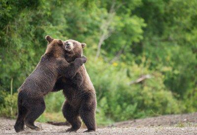 Naklejka bears embracing against Trees