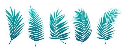 Naklejka Beautiful palm tree leaf set green background vector illustration