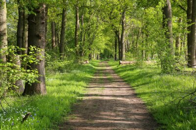 Naklejka Beautiful path though an ancient woodland or forest outside Guildford, Surrey.  UK