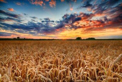 Naklejka Beautiful summer sunrise over wheat fields