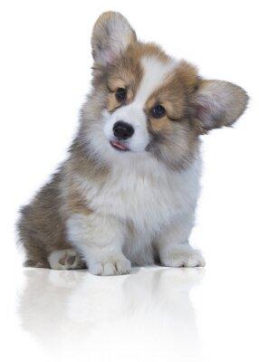Naklejka Bébé chien