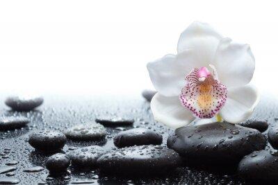 Naklejka biała orchidea i mokre czarne kamienie