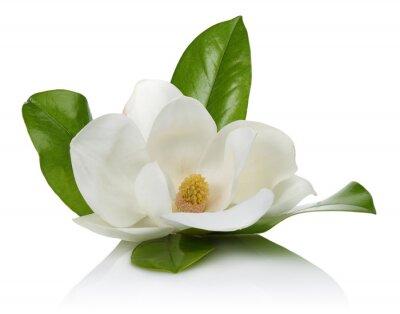 Naklejka białe magnolii