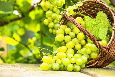 Naklejka Białe winogrona w koszyku
